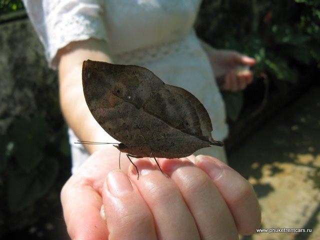 Сад бабочек (Butterfly garden)
