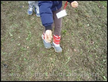 I bambini delle classi 1° della Scuola Primaria di Padulle piantano il grano! (18)