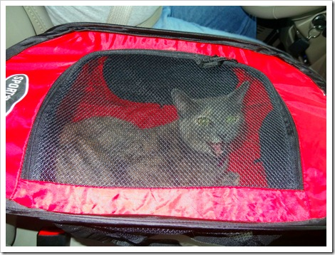 Bella in carrier.
