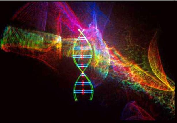 ADN A