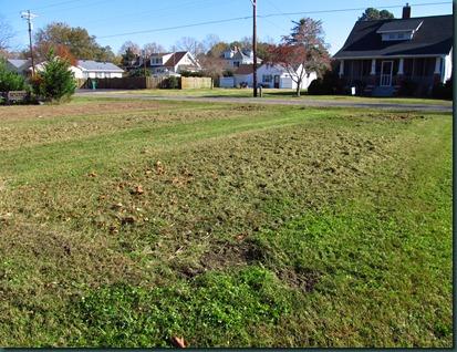 garden cleared1118 (4)