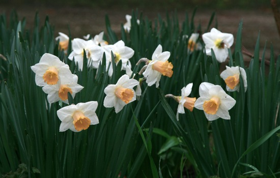 Daffs4