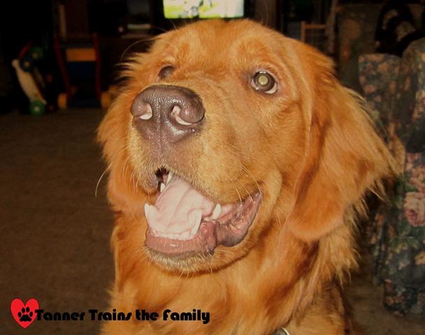 smiling puppy C