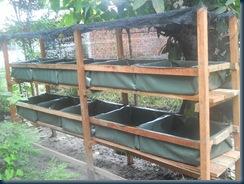 kolam bertingkat - http://kelisabah.blogspot.com/