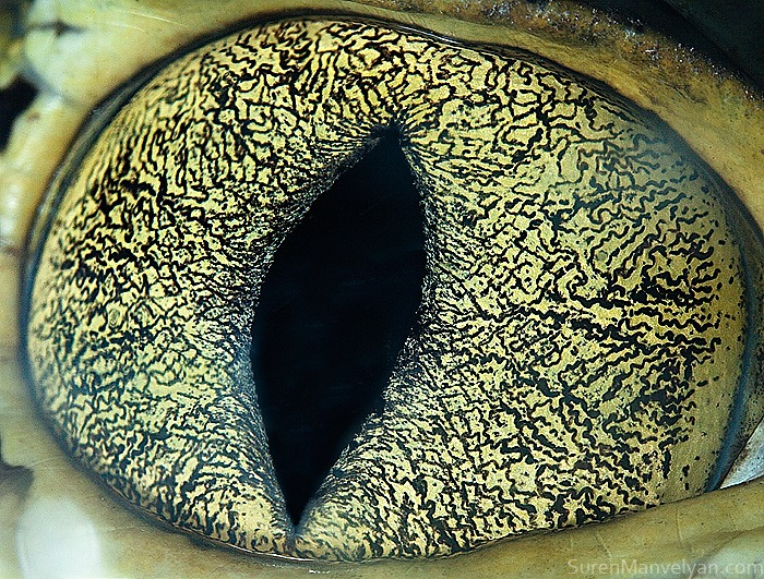 animal-eyes-12