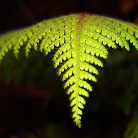 Close Up by Samit Bhoumick - Nature Up Close Leaves & Grasses ( nature, leaf, leaves, light, close up )