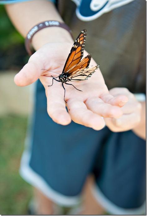 Butterfly_0035