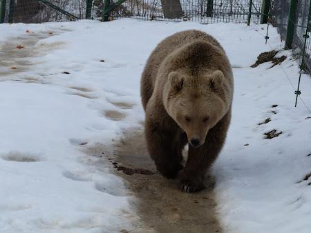 Pensiune Bran: sanctuarul ursilor