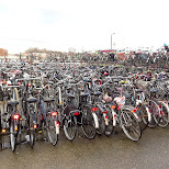 did I mention the amount of bicycles in Amsterdam? in Amsterdam, Noord Holland, Netherlands