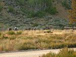 Cowboays passing our camp near Fairfield, Idaho