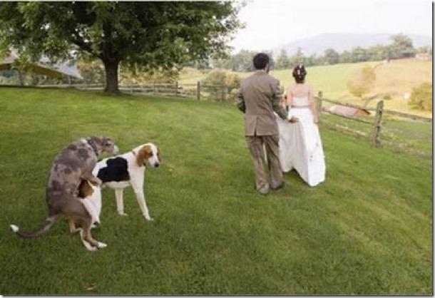 crazy-wedding-moments-17