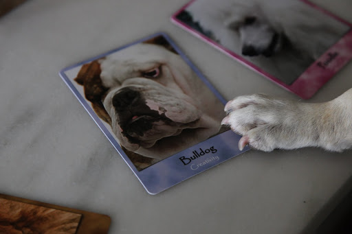 Franny, I can only find this one that says 'Bulldog.'  This guy may be creative, but he doesn't look anything like us!