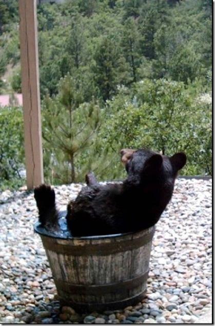 bearbath