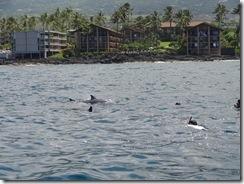 ハワイ島でドルフィンスイム