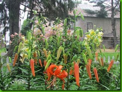 2013 lilies 006