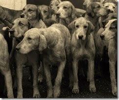 Wivi-dogs-2