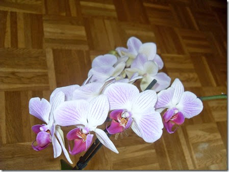 20144 Orchideen (5)