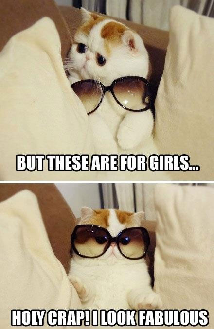 [Cat with glasses] But these are for girls… Holy Crap! I look fabulous!