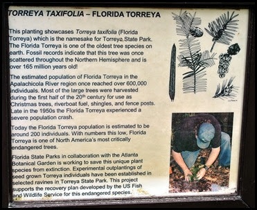 01 - Torreya Tree Sign