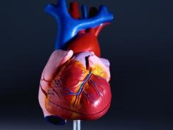Increased-heart-rate-linked-to-mortality-FEOFEGR-x
