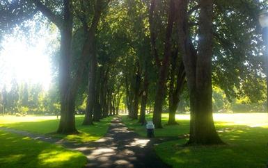 osu oak tree walk