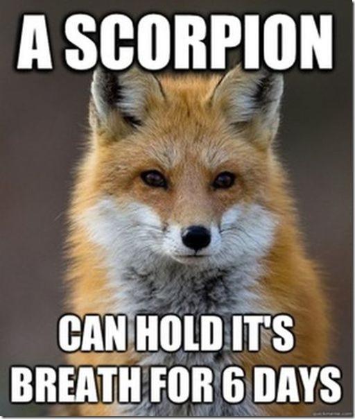 fox-facts-meme-4