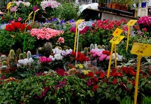 b-market-plants