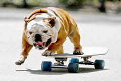 Impressive Pet Tricks