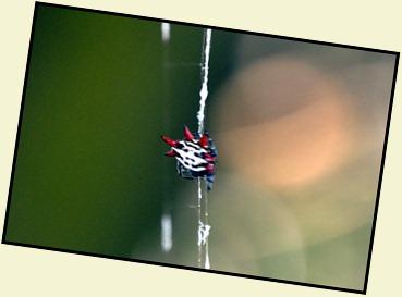 04l - Bay Shore Loop Trail - interesting spider