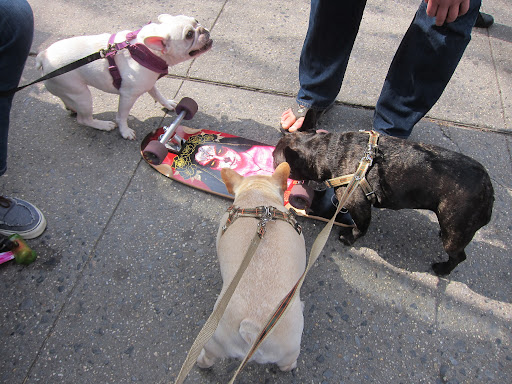 Hmmm, Sharkey, I don't know about this skateboard.  That picture is really scary!