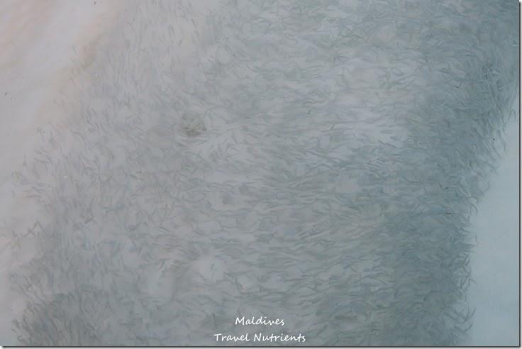 馬爾地夫 Centara渡假村 (45)