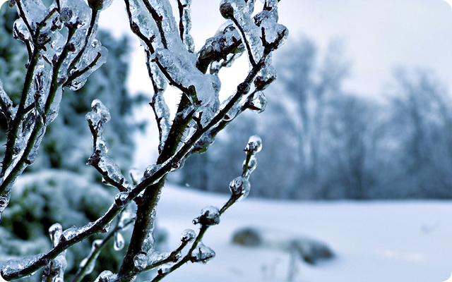 Frozen_Tree_HD_Wallpaper_by_CurtiXs
