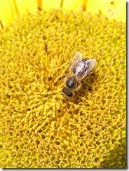 včely na květu a matečniky 191