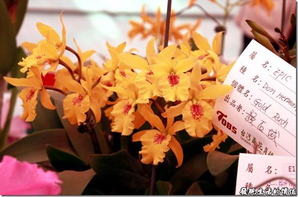 2012台南蘭花展29