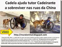 Cadela ajuda tutor Cadeirante_thumb[3][3]