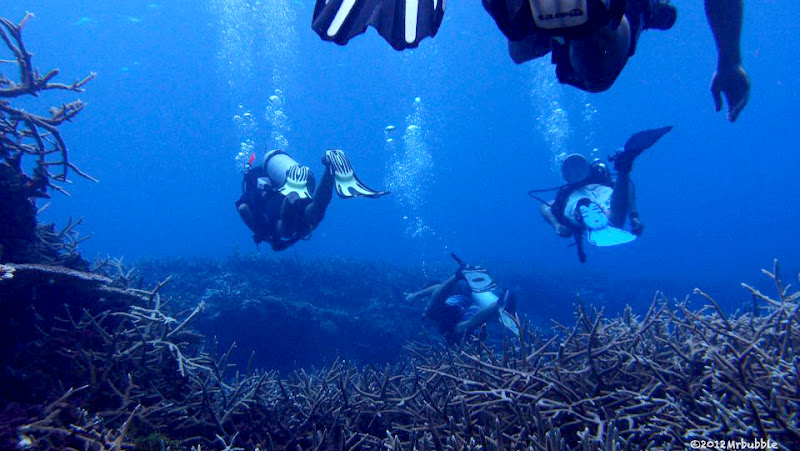 Image Result For Sumatra Divinga