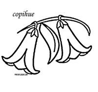 copihue 1