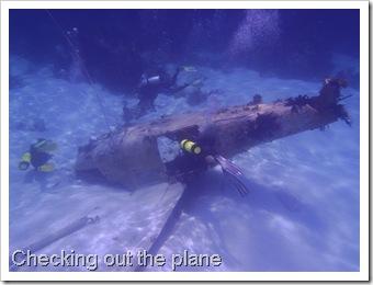 Exuma Sea Park Dive 219