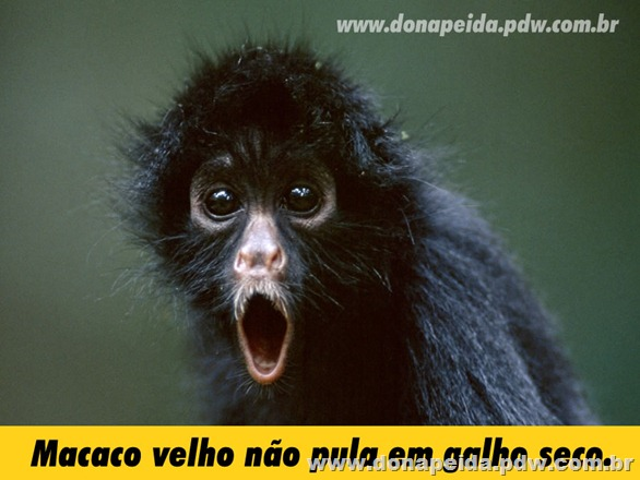 black spider monkey Wallpaper__yvt2