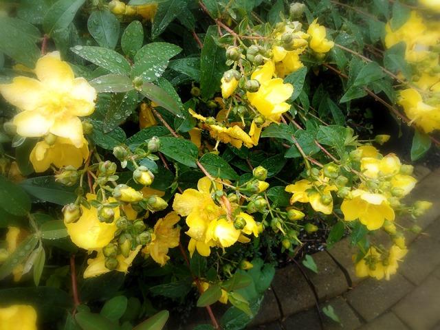 raindrops amongst the flowers