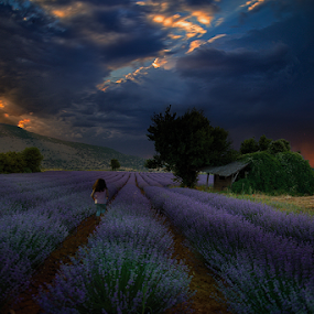 ---------------- by Dimitrios Lamprou - Landscapes Prairies, Meadows & Fields