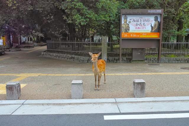 信号を守る鹿