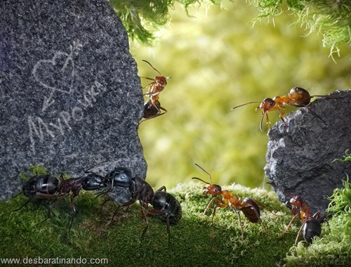 formigas inacreditaveis incriveis desbaratinando  (31)