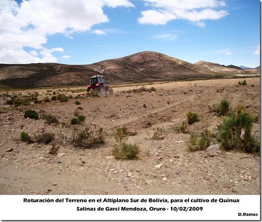 Roturación del terreno para el cultivo de Quinua Real-D.Ramos_Laquinua.blogspot.com