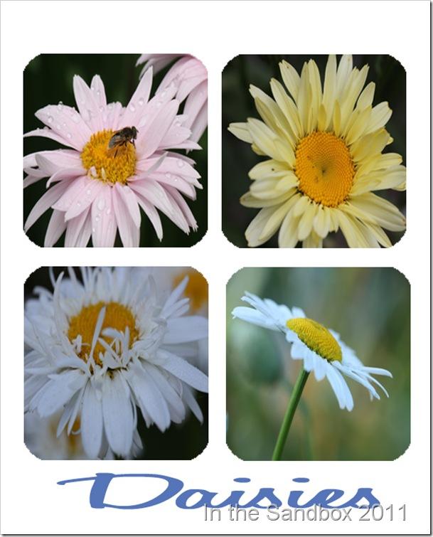 Daisy mosaic