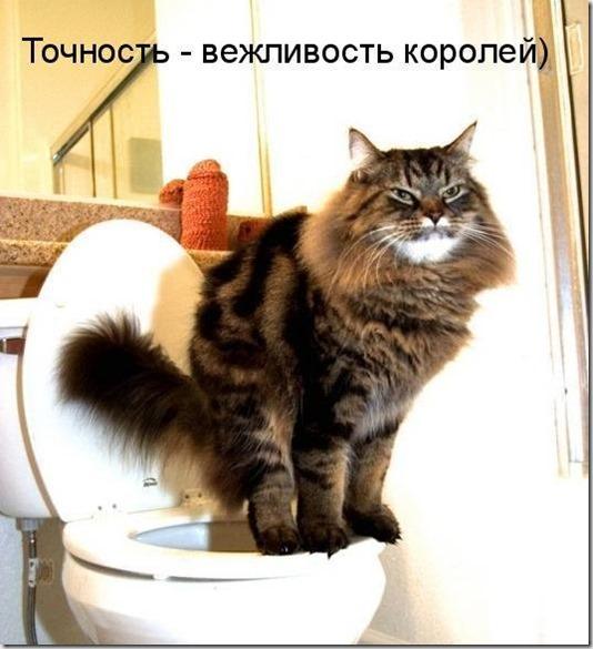 1246349672_jivotnie_4