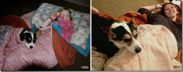 Antes e Depois de Animais de Estimação (18)