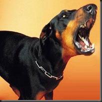 SprBS-Dog