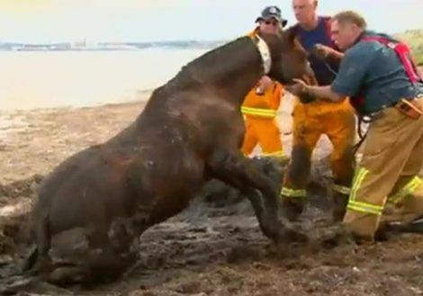 Dramatic-Horse-Rescue-Australia-03