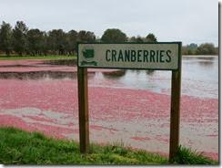 cranberry bog 05